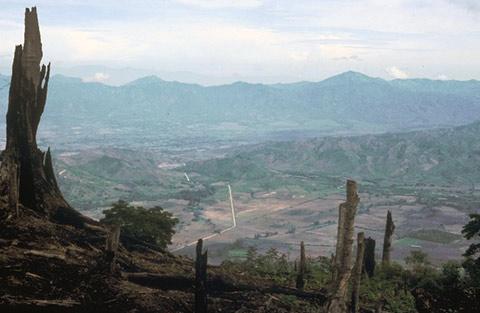 Honduras rampant deforestation