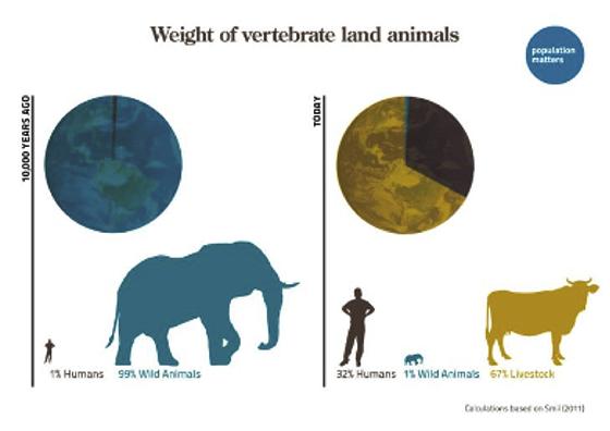 Weight of vertebrate land animals